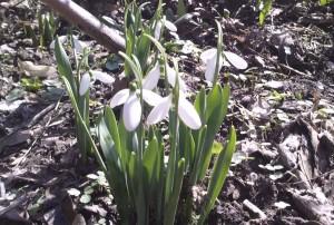 Хей, пролет иде!